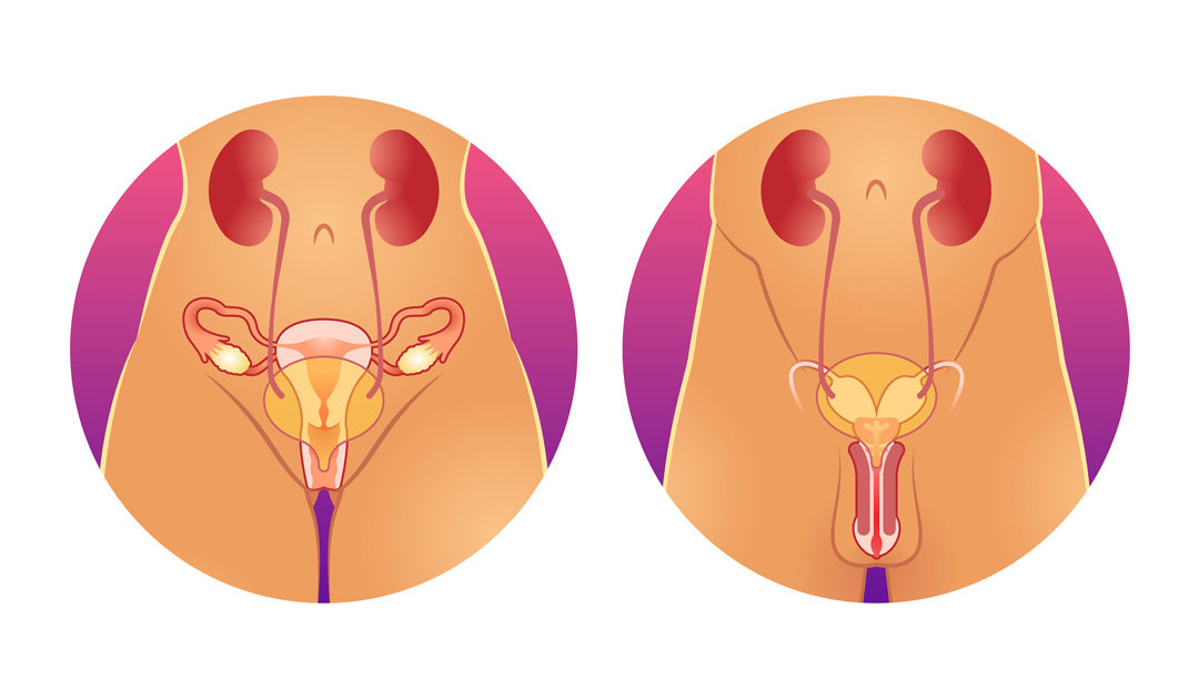Urologie-Meiningen-HPV-Impfung
